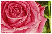 """Набор для вышивания """"Роза"""""""