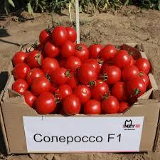 Солеросо F1 (1000шт) - Насіння томату детермінантного, Nunhems