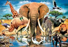 У світі тварин