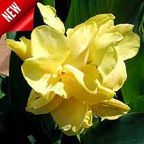 Новинки многолетних цветов с поставкой в феврале 2020 года уже в нашем Интернет-магазине!