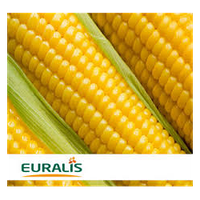 Насіння кукурудзи ЕС СЕНСОР, EURALIS