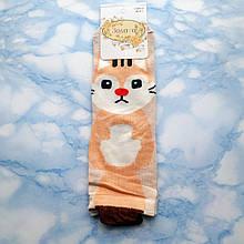 Шкарпетки жіночі Золото з принтом світлі розмір 36-41