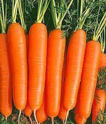 Насіння моркви Джерада F1 (1.000 000шт) Rijk Zwaan (1,8-2,0мм)