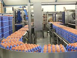 Перевозка инкубационных яиц  EСS, транспортировка инкубационных яиц
