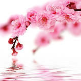 Журнальный стол круглый с полкой Sakura стеклянный, фото 3