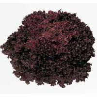 РЕВОЛЮЦИЯ (5000драже) - салат листовой, Nunhems