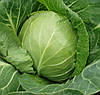 ОРАКЛ F1 - семена капусты белокочанной, CLAUSE 10 000 семян