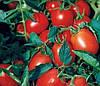 МОРЕЛИЯ F1 - семена томата, Enza Zaden 500 семян