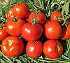 ИМРАН F1 - семена томата, Enza Zaden 500 семян