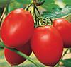 КОЛИБРИ F1 - семена томата, CLAUSE 1000 семян