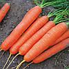 САТУРНО F1  - семена моркови, CLAUSE 100 000 семян