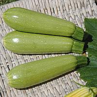 СУПЕР ДОНИЯ F1- семена кабачка CLAUSE 2 500 семян