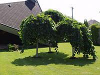 Высадка деревьев и кустарников