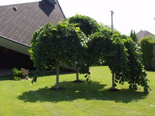 Высадка деревьев и кустарников - Ландшафтное бюро «3-Л» в Киеве 56aa990768f8e