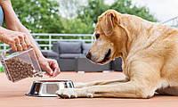 Роль круп в питании собак