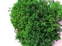 Стабилизированный мох украинский ягель зеленый  500 грамм