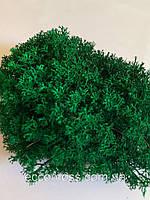 Ягель украинськый изумрудный мох ягель 500 грамм