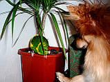 Папуги (Какарики) - домінантний строкатий., фото 7