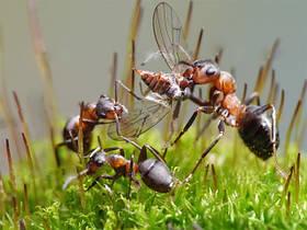 Корм для муравьев белковый витаминизированный (ускоряет рост колонии)