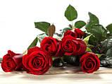 Журнальный стол прямоугольный с полкой Red Roses стеклянный, фото 3