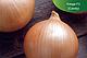 Семена лука Кенди (Кэнди) F1  / Candy F1 Seminis 10000 семян, фото 9