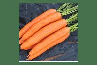 """Морковь """"Берликумер 2"""" дражированная, Польша, 500 г"""