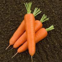 Насіння моркви Октаво F1 VD (100 000шт) Vilmorin (2,0мм+)