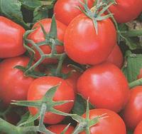 9661 F1 - семена томата, Lark Seed 500 семян