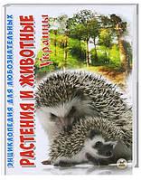 Талант Энциклопедия для любознательных. Растения и животные Украины - Станкевич Т.А. (9786176950639)