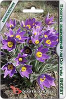 Прострел обыкновенный или сон-трава Виолет 10 шт (Биотехника)