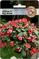 Бальзамин Валлера махровый ампельный Атена F1 Рэд Флэш 8 шт (Биотехника)