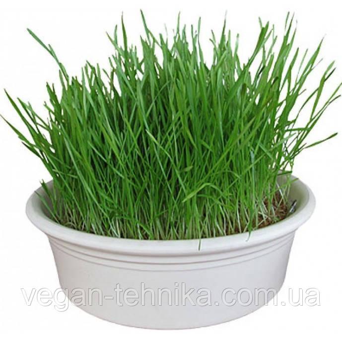Проращиватель Eschenfelder для ростков пшеницы (Витграсс), 23 см