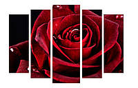 Модульная картина Декор Карпаты 120х80 см Роза (M5-c7)