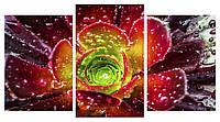 Модульная картина Декор Карпаты 100х53 см (M3-t160)