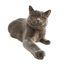 Корма для кошек