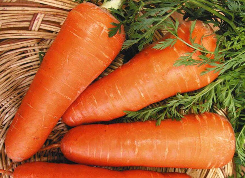 Насіння моркви Шантане Редкор (0,25кг) Sakata