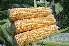 Семена сахарной кукурузы Свит Наггет F1 1000 семян Agri Saaten