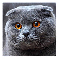 Алмазная мозайка DIY Веслоухий кот 20х20см. Коты. Животные, фото 1