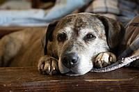 Правила кормления для пожилых собак