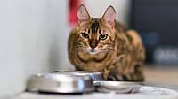Правила кормления для возрастных котов