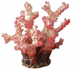 Корм для коралів