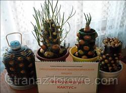 Вітамінний кактус