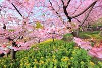 Весенний сад, Floressence - 10 мл