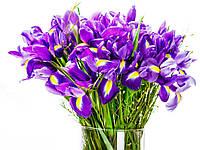 Ирисы, Floressence - 10 мл