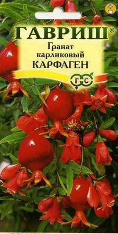 Семена Гранат карликовый Карфаген, фото 2