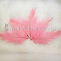 Перо страуса, 10-15 см, розовый