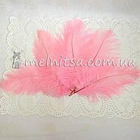 Перо страуса, 15-18 см, розовый