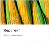 Цікаві факти про інсектицид Кораген, від компаніїї FMC