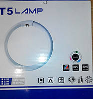 Поступление в продажу кольцевых люминесцентных ламп Т5 22W и Т5 40W.