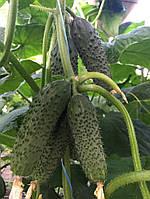 Насіння огірка партенокарпічного Унікум F1 (42 днів) ранній гібрид, (250 нас.) Lark Seeds